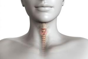 Щитовидка